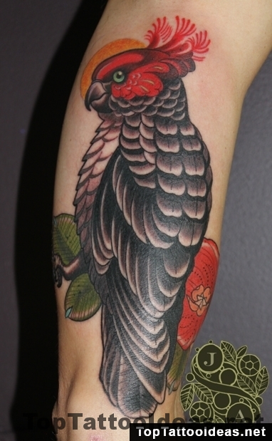 parrot gray red